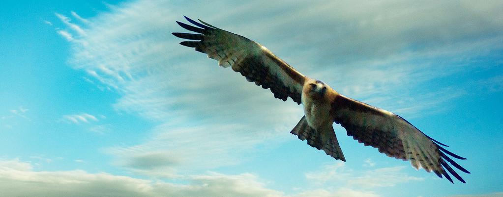 Hawk_Karla